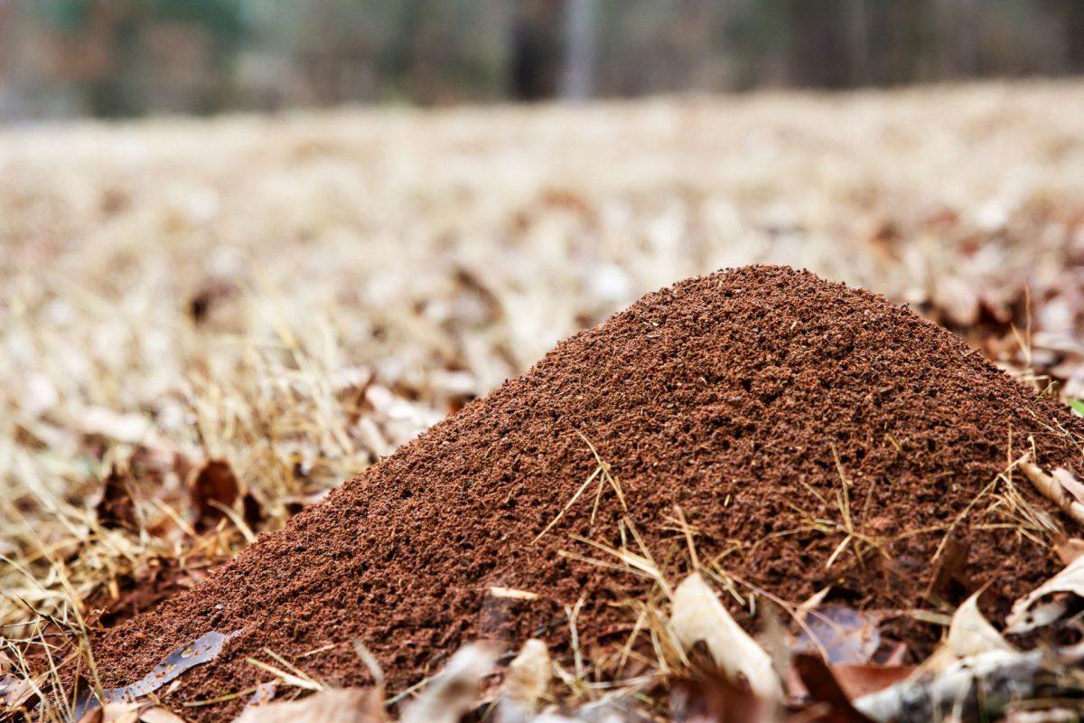 Nature Pro Lawn Care - Alabaster Helena Calera Pelham Alabama - Lawn Pest Control Service Ants