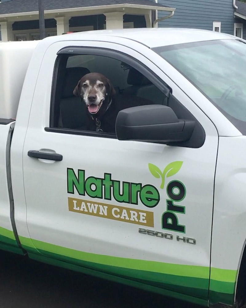Nature Pro Lawn Care LLC - Puppy mascot in truck